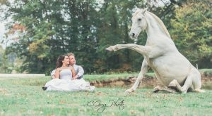 dressage cheval seance photo afterday cgregphoto